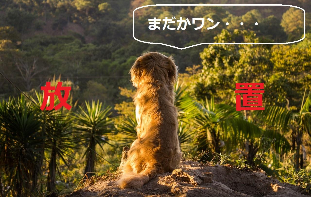 放置される犬